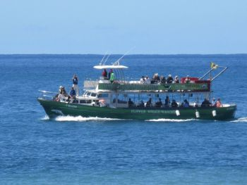 Flipper boat trips Tazacorte whale watching and dolphins la Palma