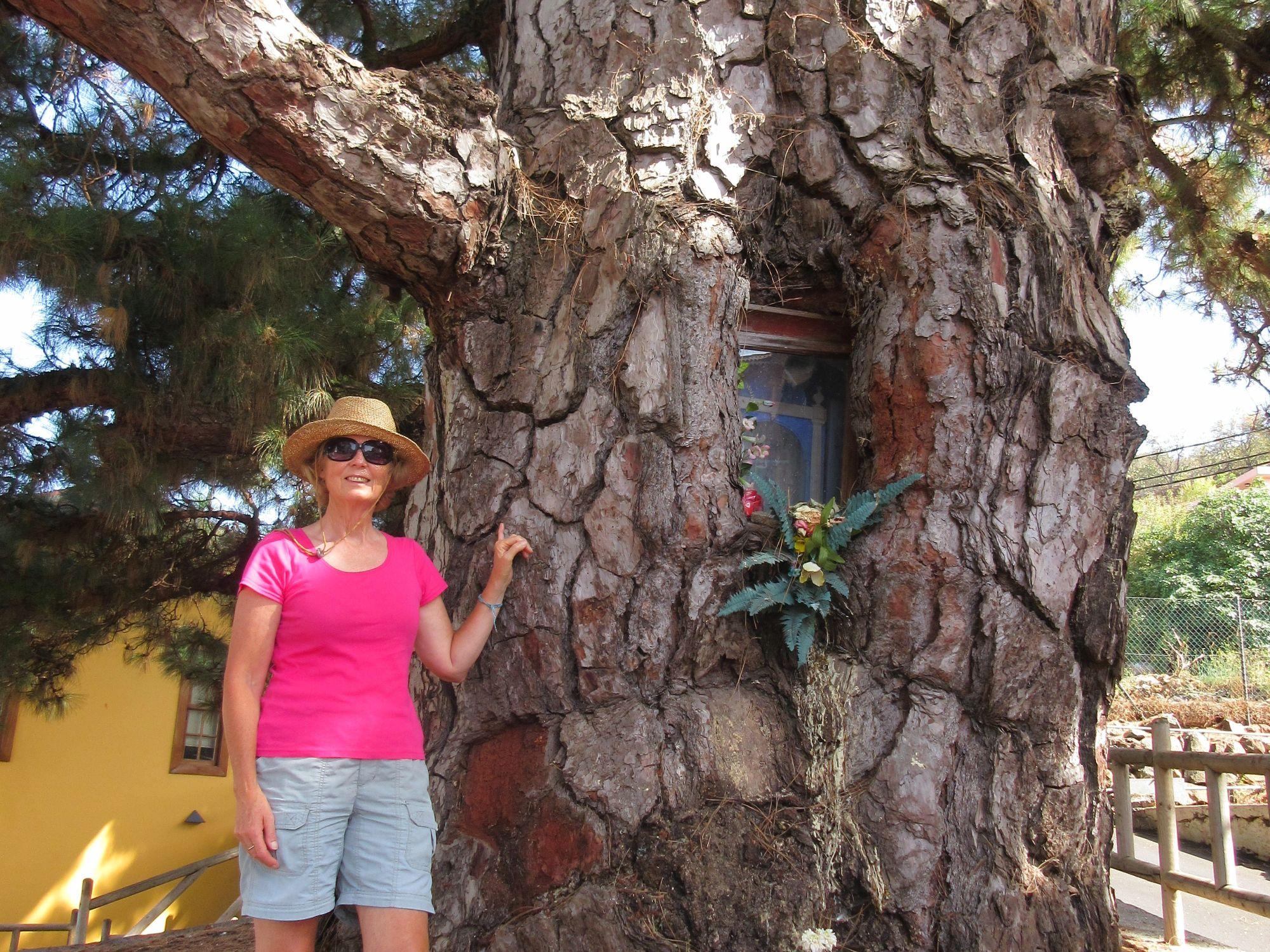 Puntagorde el pino pine tree