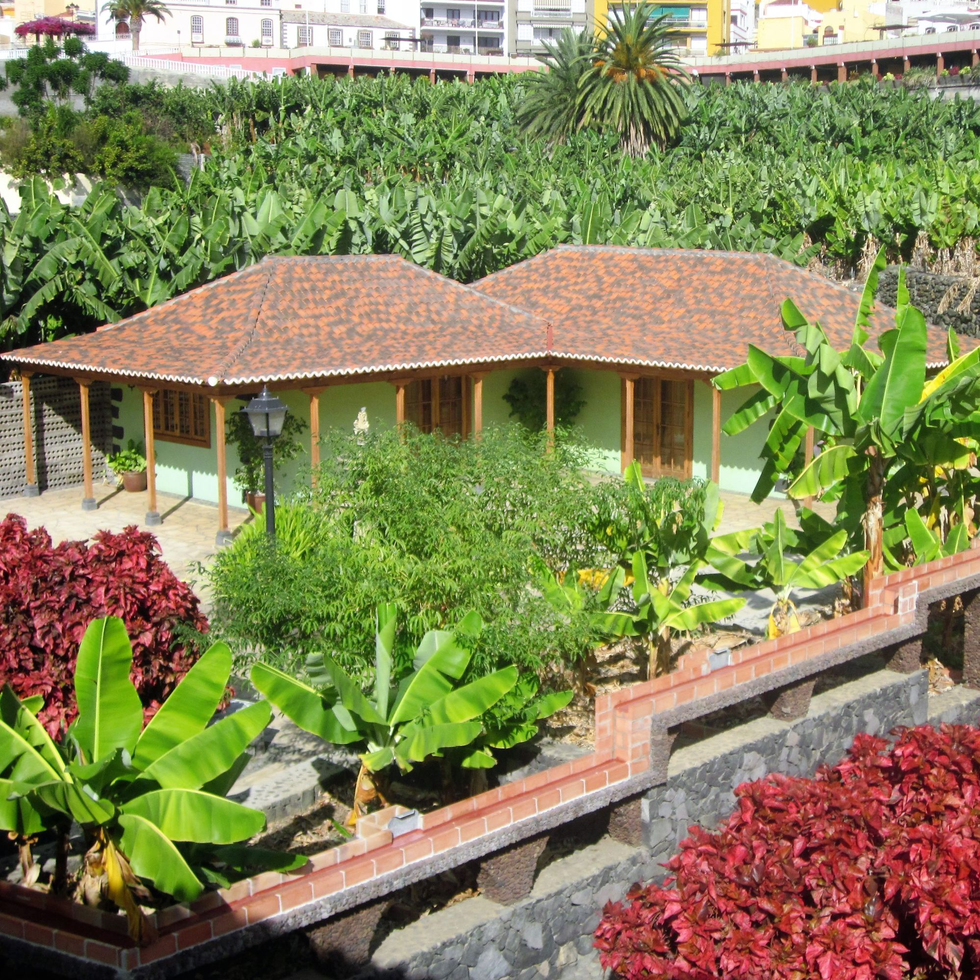 Banana  museum Tazacorte museo de platano