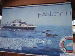 Fancy II at Tazacorte whale watching and dolphin boat trips