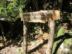 Walking Los tilos sub-tropical rain forest