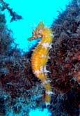 SCUBA diving on la Palma Canary Islands