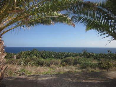 Casa Pancho Molina palm trees