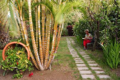 Apartments Los Llanos garden 1