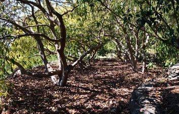 Casa Minerva orchard