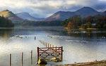 Derwentwater Gate, Lake District. (2141)
