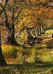 Loughrigg Tarn (5542)
