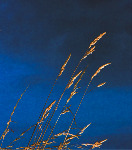 Grasses - Side fold photo card