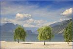 Willow Trees, Lake Garda- tent fold photo card