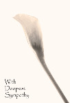 Zantedeschia Lily - Sepia toned sympathy card.   Side fold photo card