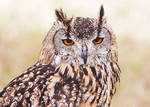 Owl (10946)