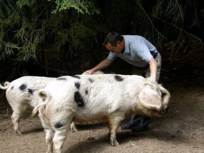 Ryan with a couple of our breeding GOS sows