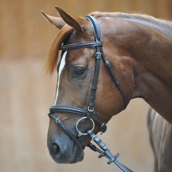 """Bridle """"Quentin"""" with flash noseband (£47.50 Exc VAT & £57.00 Inc VAT) Product code 190 03"""