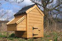 'Small' Chicken Coop