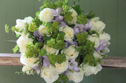 avalanche and lilac freesia