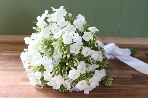 white phlox brides bouquet