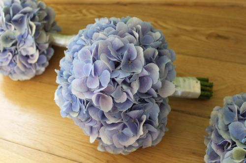 blue hydrangea brides bouquet