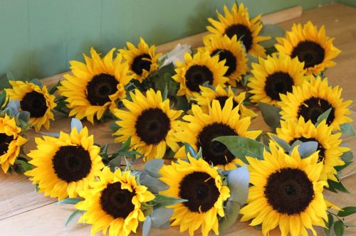 sunflower button holes