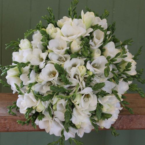 White Freesia Knot