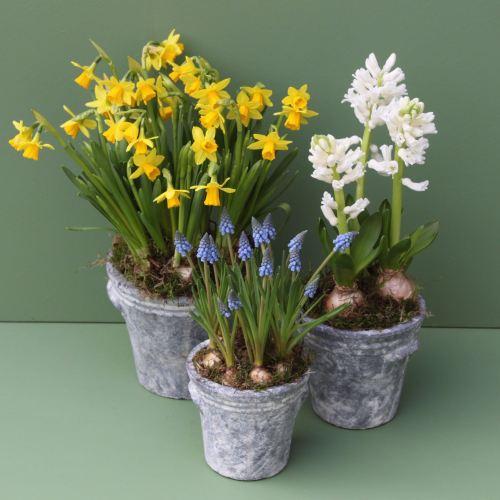 Trio of Spring Bulbs