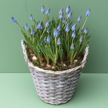 Muscari Basket