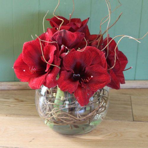 Burgundy Amaryllis Christmas Vase