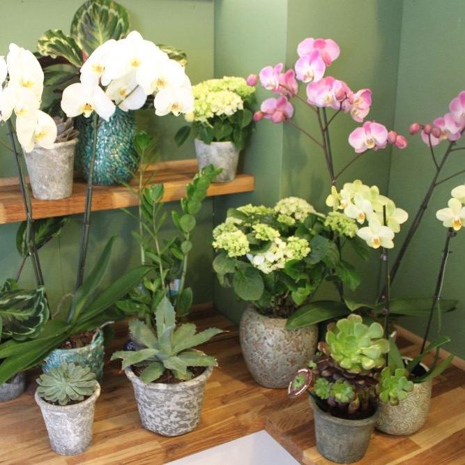6 - Plants