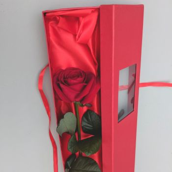 Single Red Naomi rose in a box