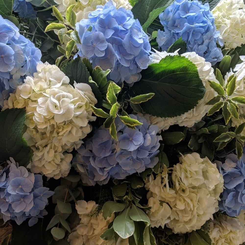 White & Blue Hydrangea Coffin Spray