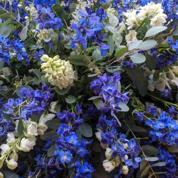 Delphinium Coffin Spray