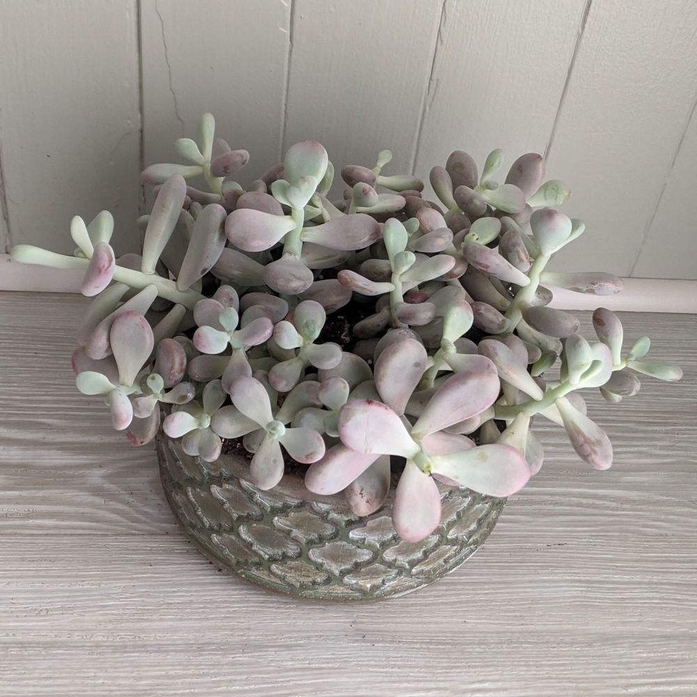 Moonstones. Price from