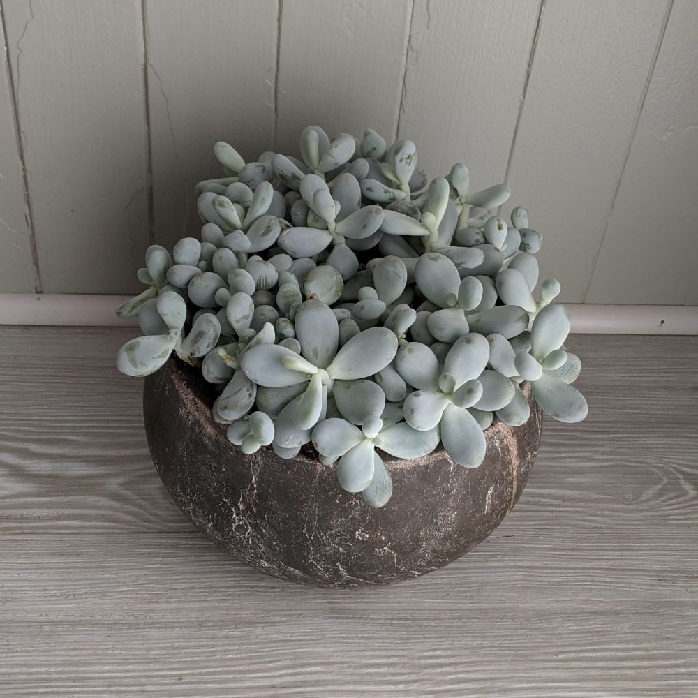 Moonstones Tanno. Price from