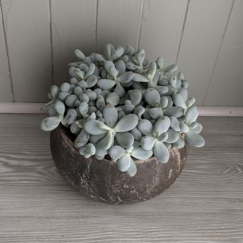 Moonstones Earth. Price from