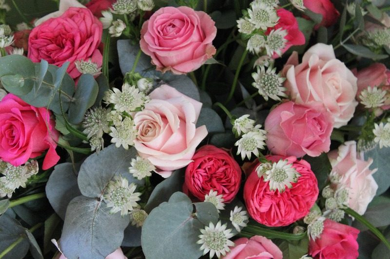 rose and astrantia