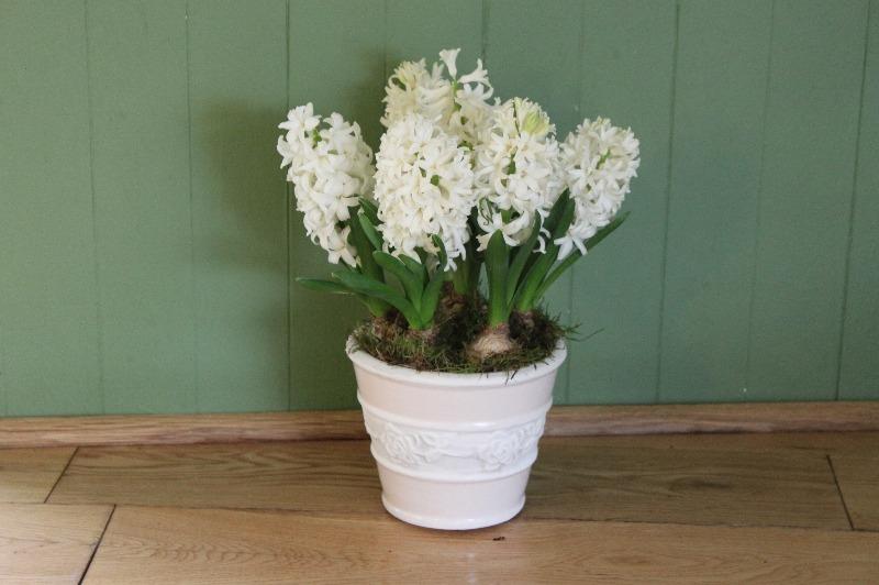white hyacinth pot