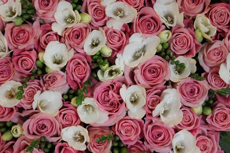 pink rose white freesia heart close up