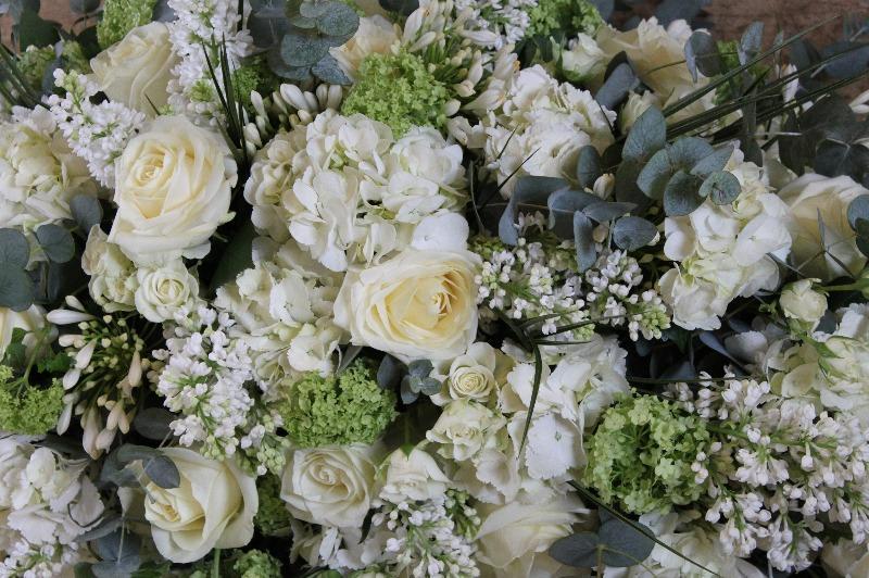 white rose hydrangea