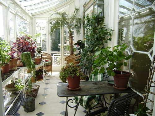 Conservatory Plant Specialist Fleur De Lys