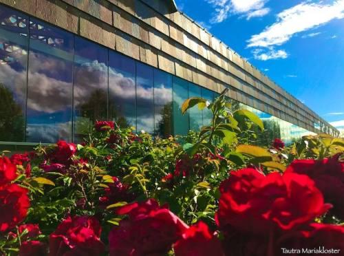 kloster og roser
