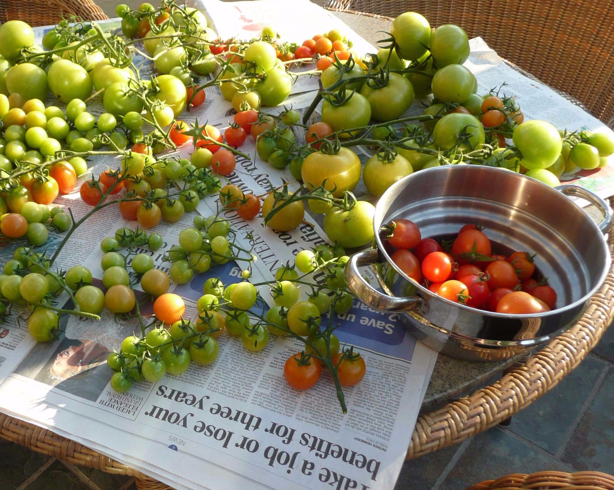 Best way to Ripen Green Tomatoes