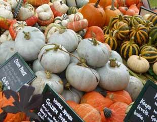 ornamental gourds-