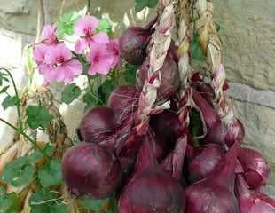 Storing red onions