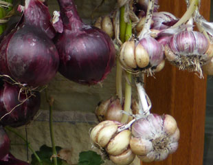 Garlic and onions store well