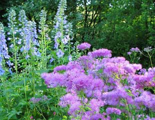 Summer Planting Ideas