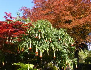 Grange court garden wonderful shrubs and light