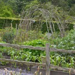 tidy kitchen garden