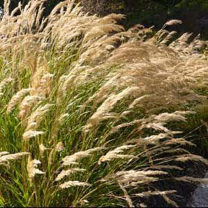 grasses-300