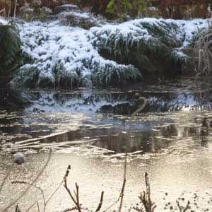 pond-in-winter-300
