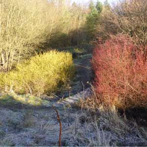 winter-landscape-2