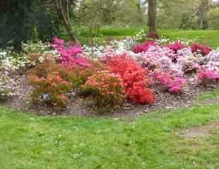 Kew Azalea bed